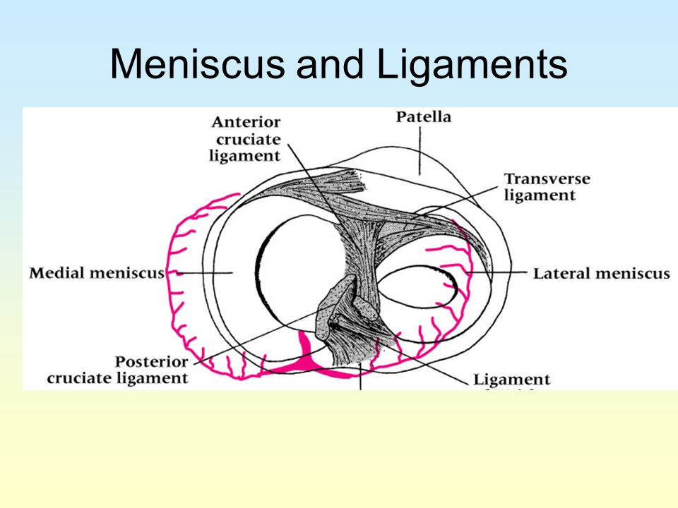 Meniscus and Ligaments