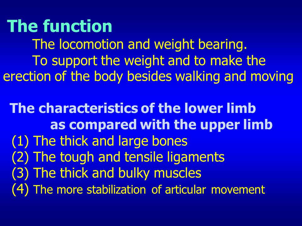 The function The locomotion and weight bearing