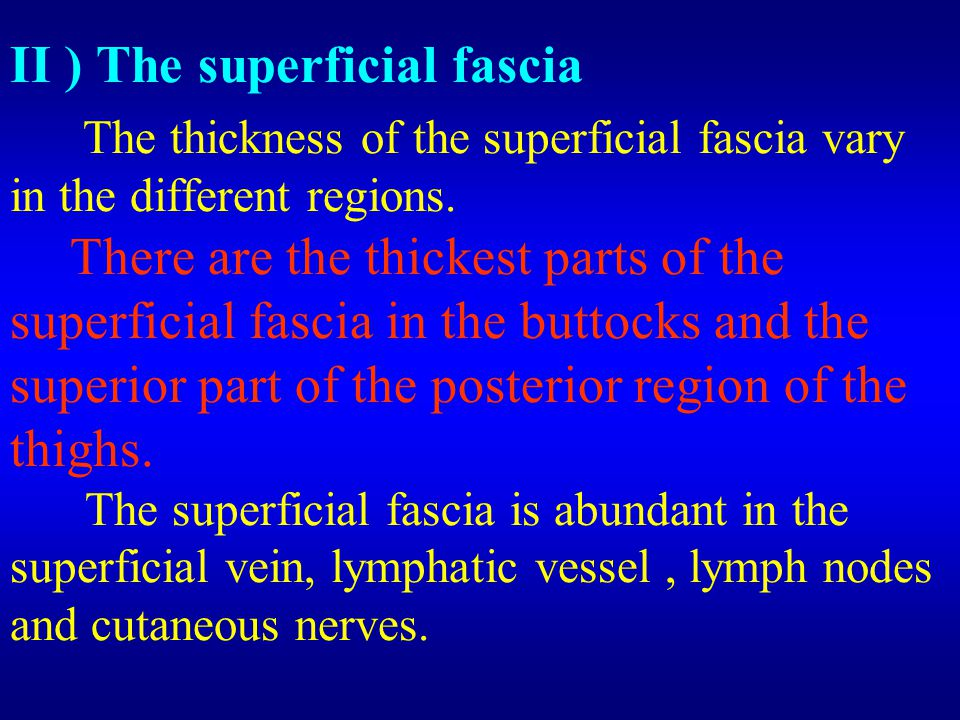 II ) The superficial fascia The thickness of the superficial fascia vary in the different regions.