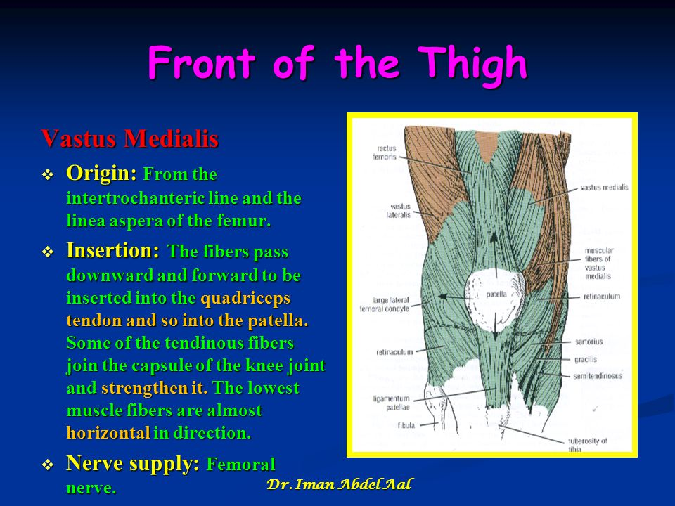 Front of the Thigh Vastus Medialis