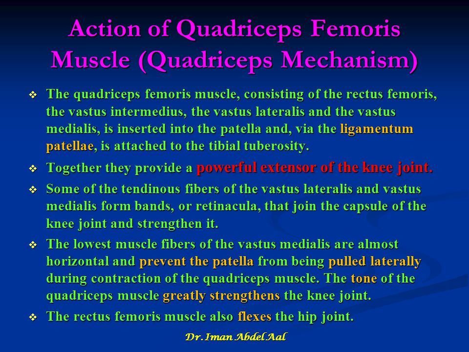 Action of Quadriceps Femoris Muscle (Quadriceps Mechanism)
