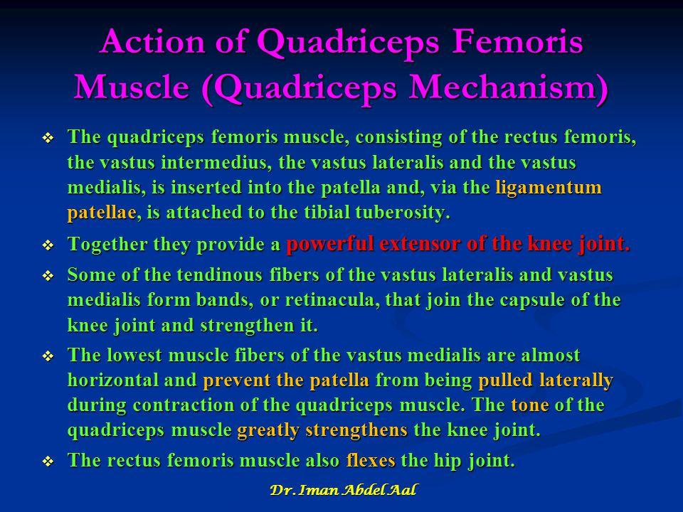 Action of Quadriceps Femoris Muscle (Quadriceps Mechanism)