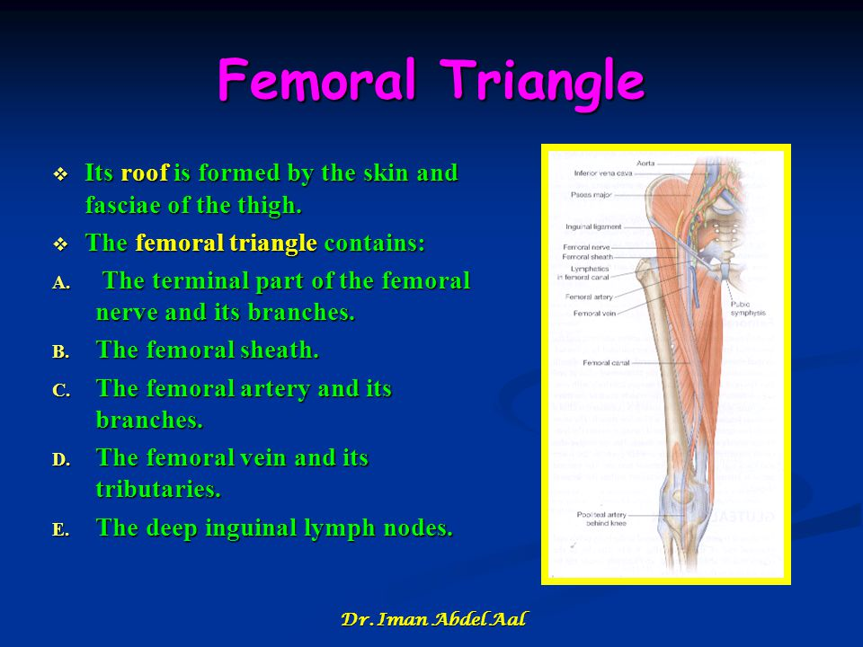 Femoral Triangle Its roof is formed by the skin and fasciae of the thigh. The femoral triangle contains: