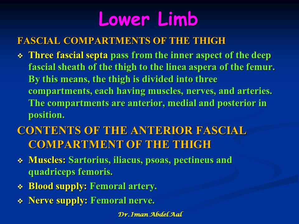 Lower Limb CONTENTS OF THE ANTERIOR FASCIAL COMPARTMENT OF THE THIGH