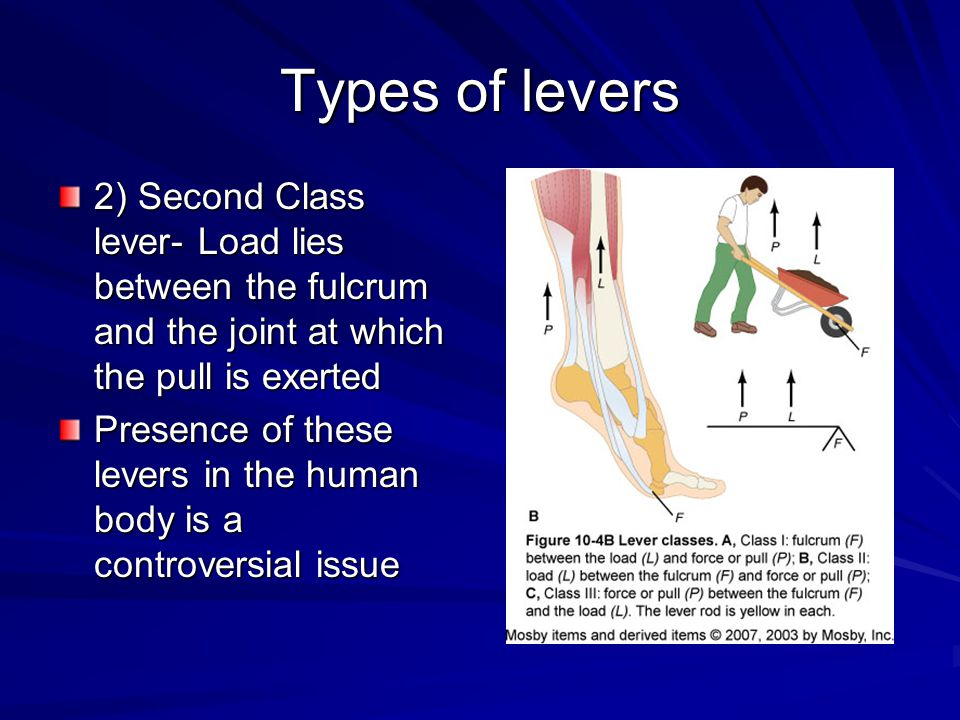 Types of levers 2) Second Class lever- Load lies between the fulcrum and the joint at which the pull is exerted.