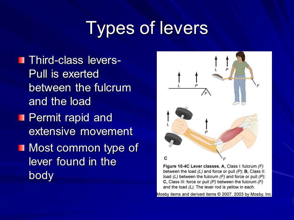 Types of levers Third-class levers- Pull is exerted between the fulcrum and the load. Permit rapid and extensive movement.