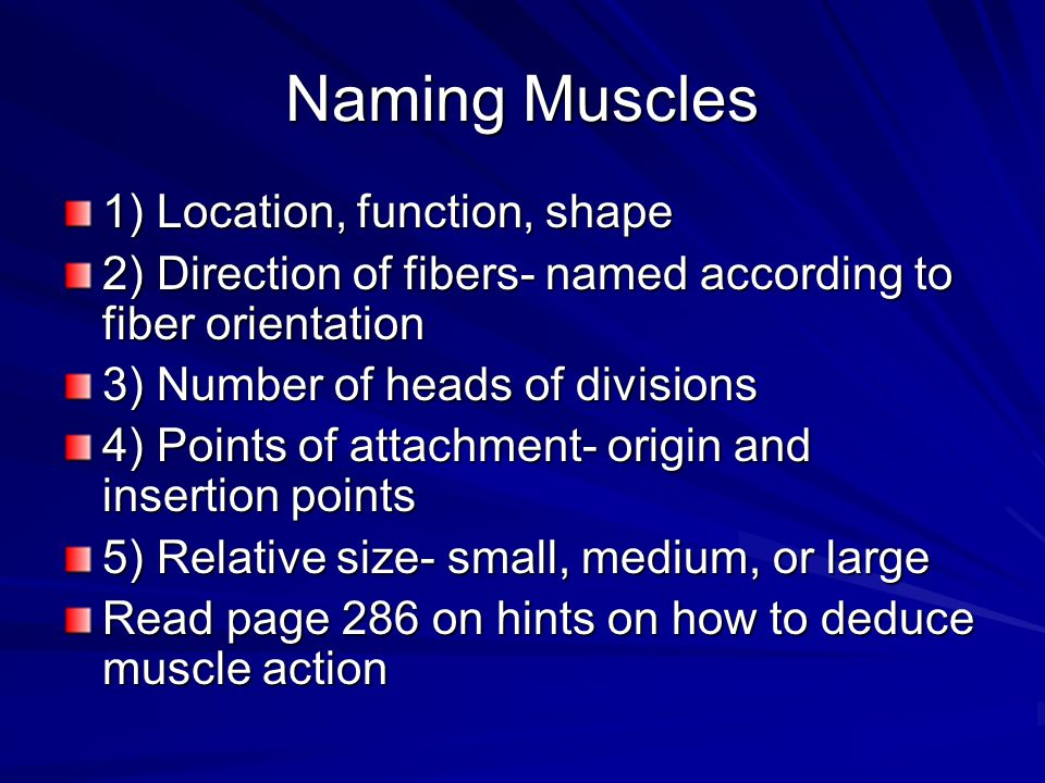 Naming Muscles 1) Location, function, shape