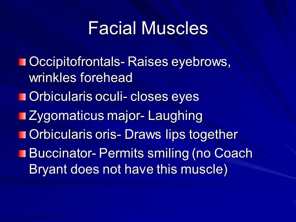 Facial Muscles Occipitofrontals- Raises eyebrows, wrinkles forehead
