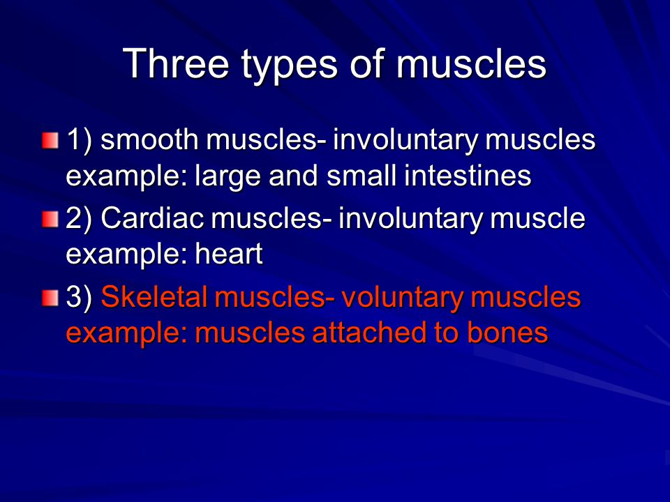 Three types of muscles 1) smooth muscles- involuntary muscles example: large and small intestines.