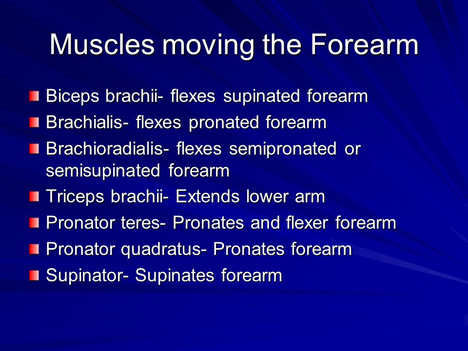 Muscles moving the Forearm