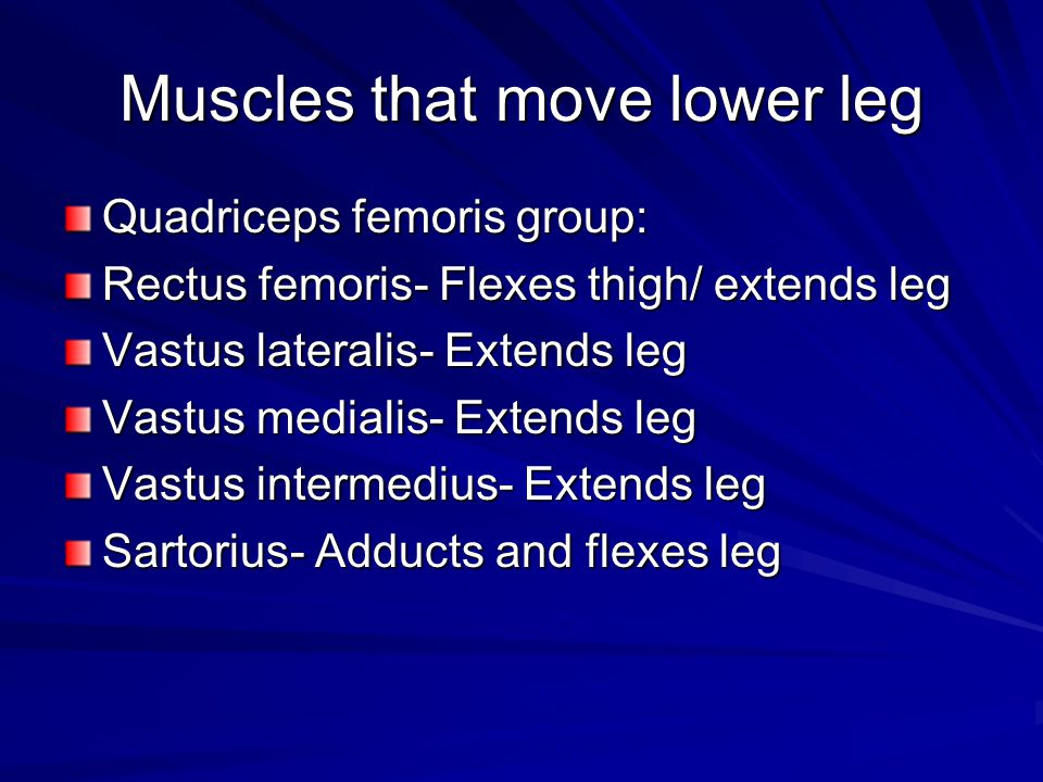 Muscles that move lower leg
