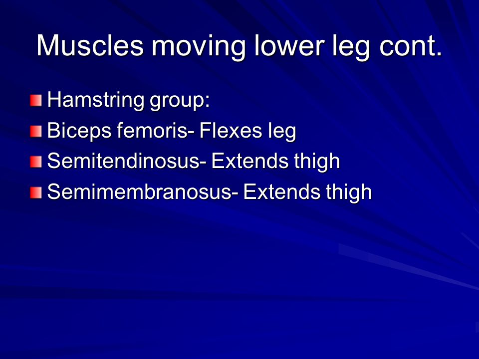 Muscles moving lower leg cont.