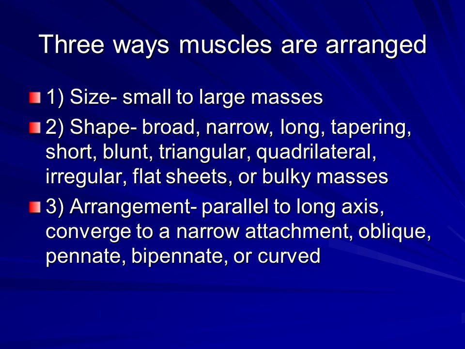 Three ways muscles are arranged