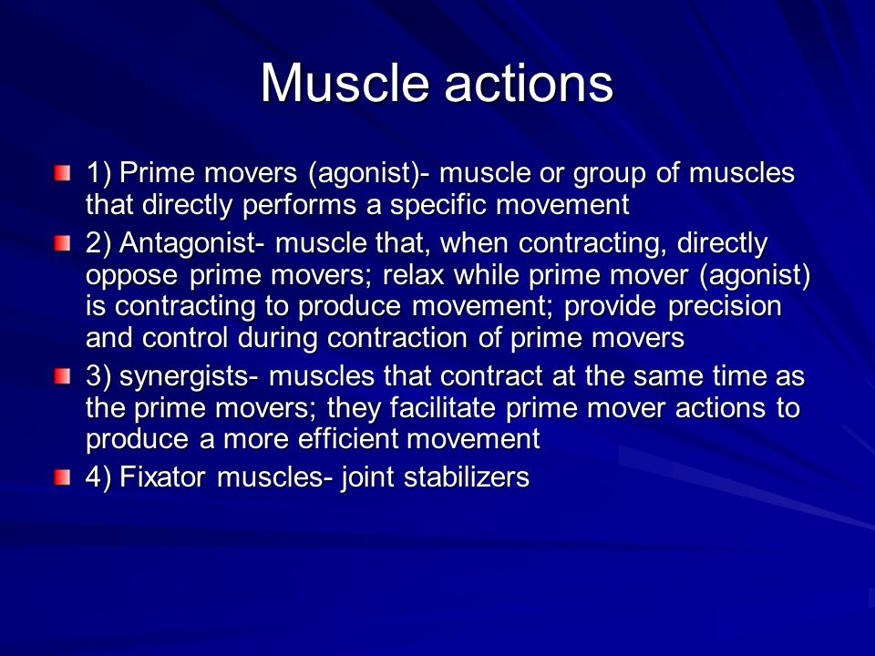 Muscle actions 1) Prime movers (agonist)- muscle or group of muscles that directly performs a specific movement.