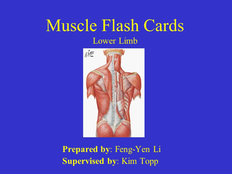 Muscle Flash Cards Lower Limb Ppt Video Online Download