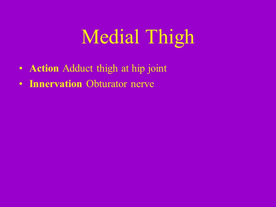 Medial Thigh Action Adduct thigh at hip joint