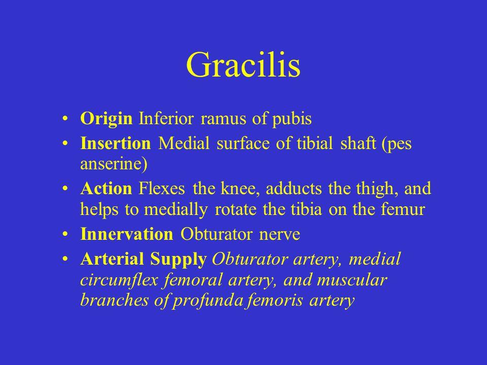 Gracilis Origin Inferior ramus of pubis