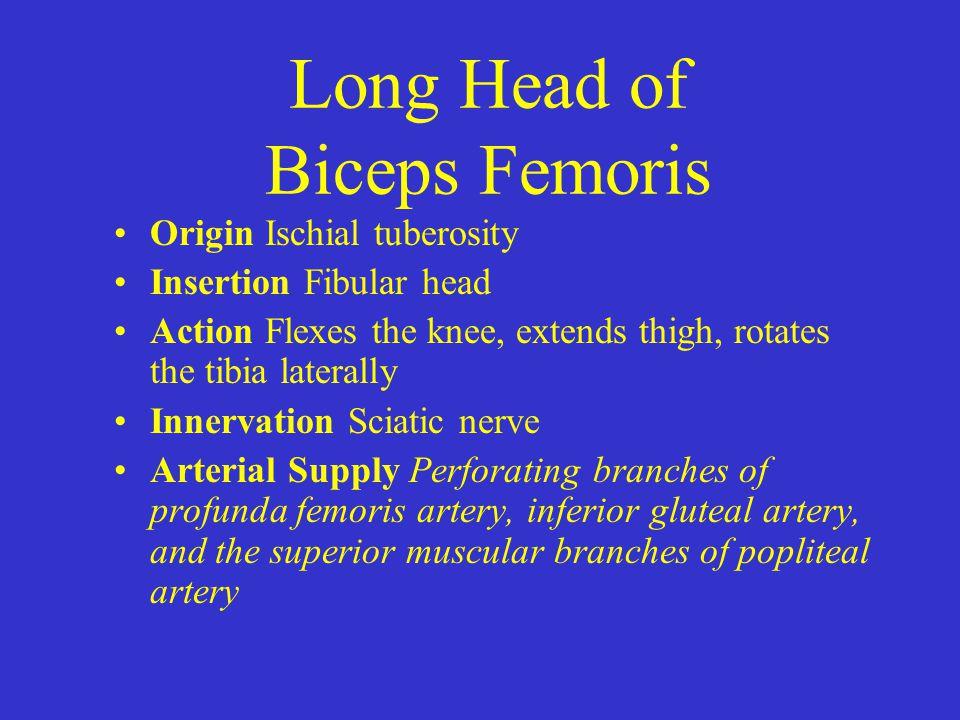 Long Head of Biceps Femoris