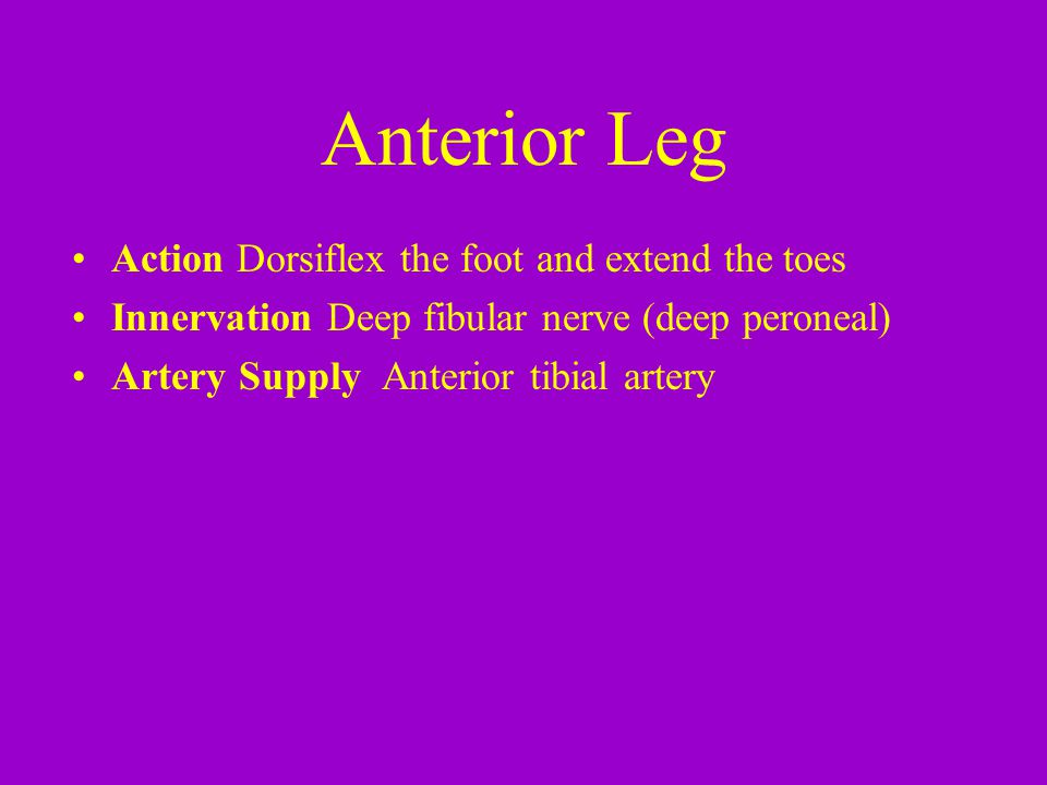 Anterior Leg Action Dorsiflex the foot and extend the toes