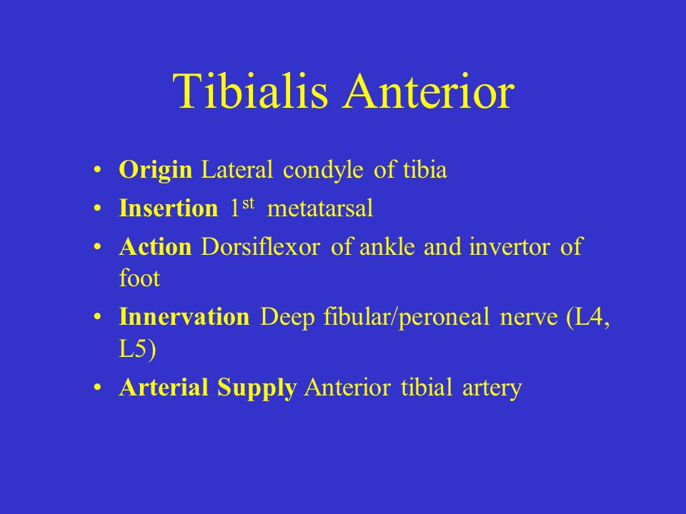 Tibialis Anterior Origin Lateral condyle of tibia