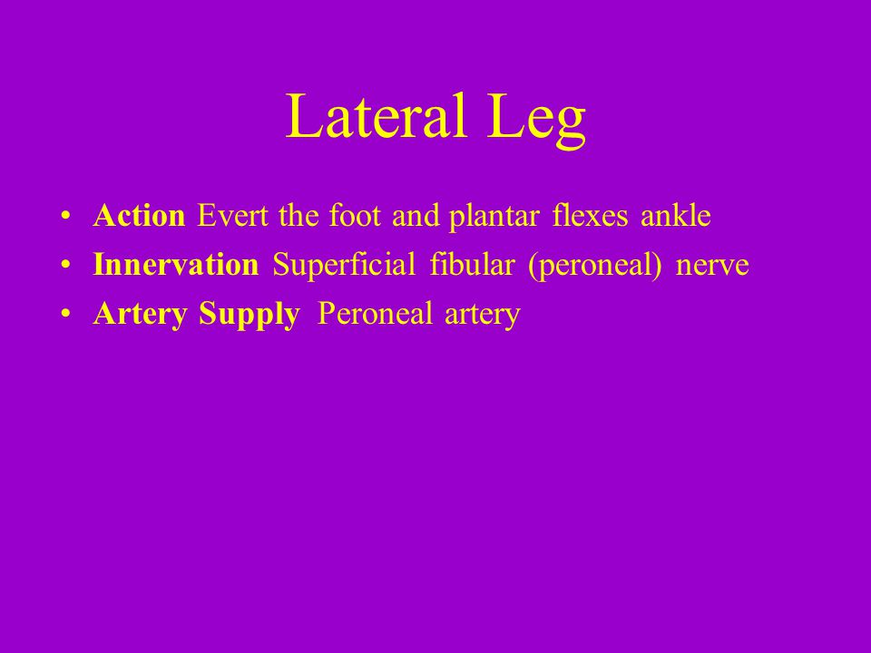Lateral Leg Action Evert the foot and plantar flexes ankle
