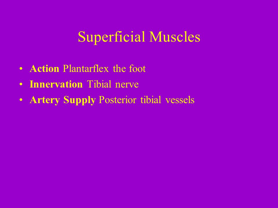 Superficial Muscles Action Plantarflex the foot