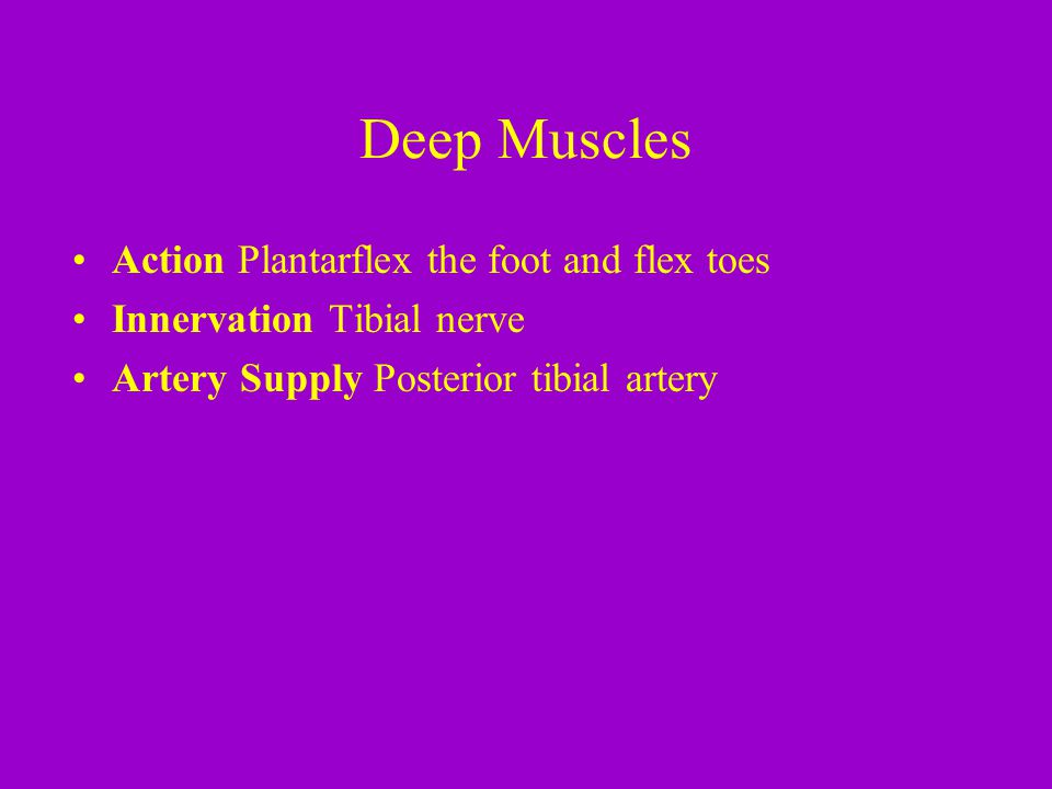 Deep Muscles Action Plantarflex the foot and flex toes