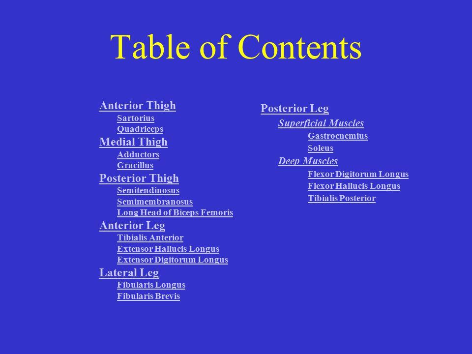Table of Contents Anterior Thigh Medial Thigh Posterior Thigh