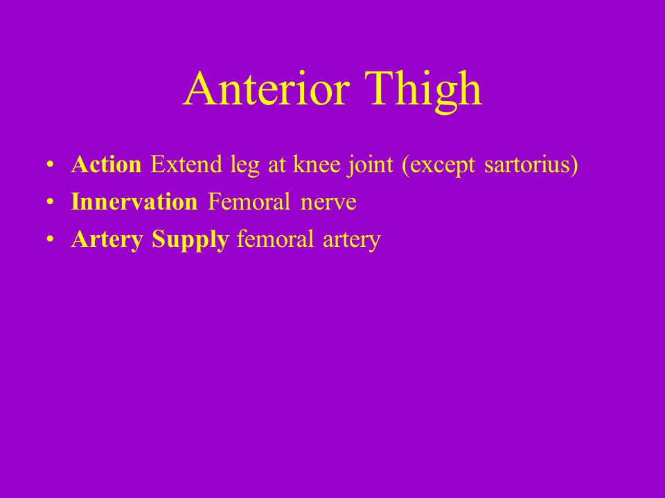 Anterior Thigh Action Extend leg at knee joint (except sartorius)