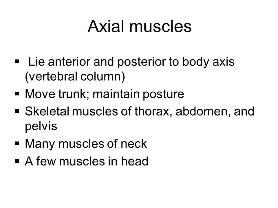 Axial muscles Lie anterior and posterior to body axis (vertebral column) Move trunk; maintain posture.