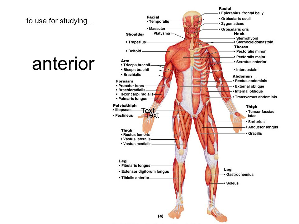 to use for studying... anterior Text Text