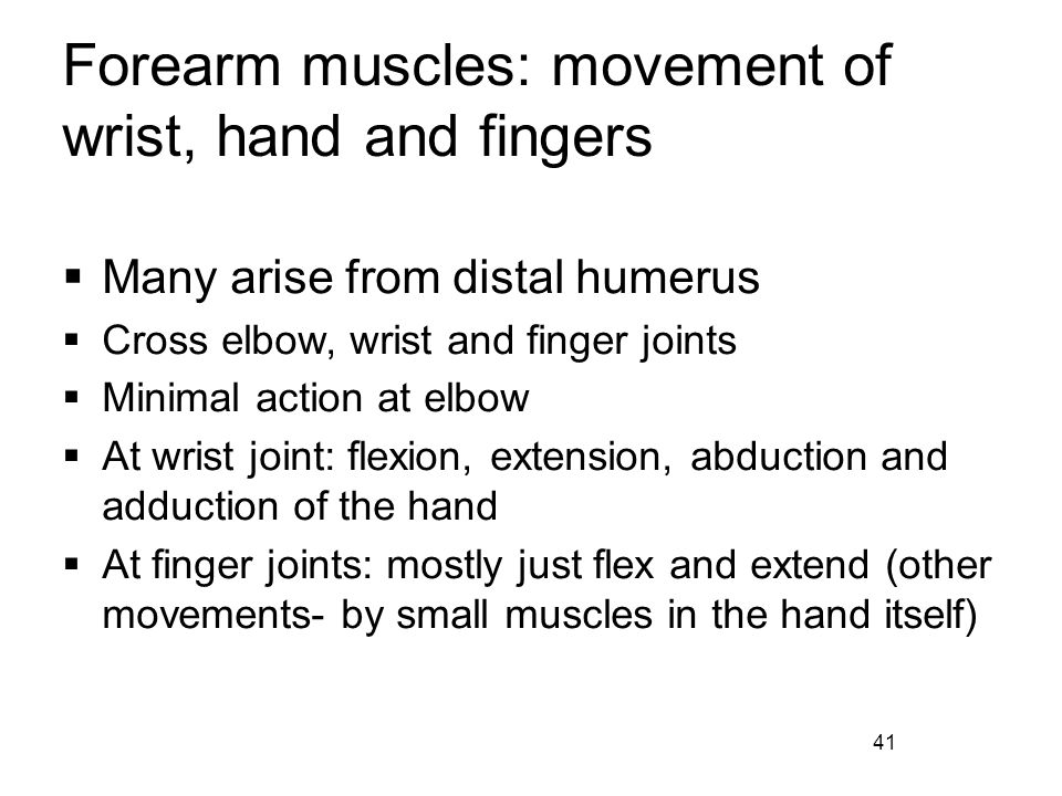 Forearm muscles: movement of wrist, hand and fingers