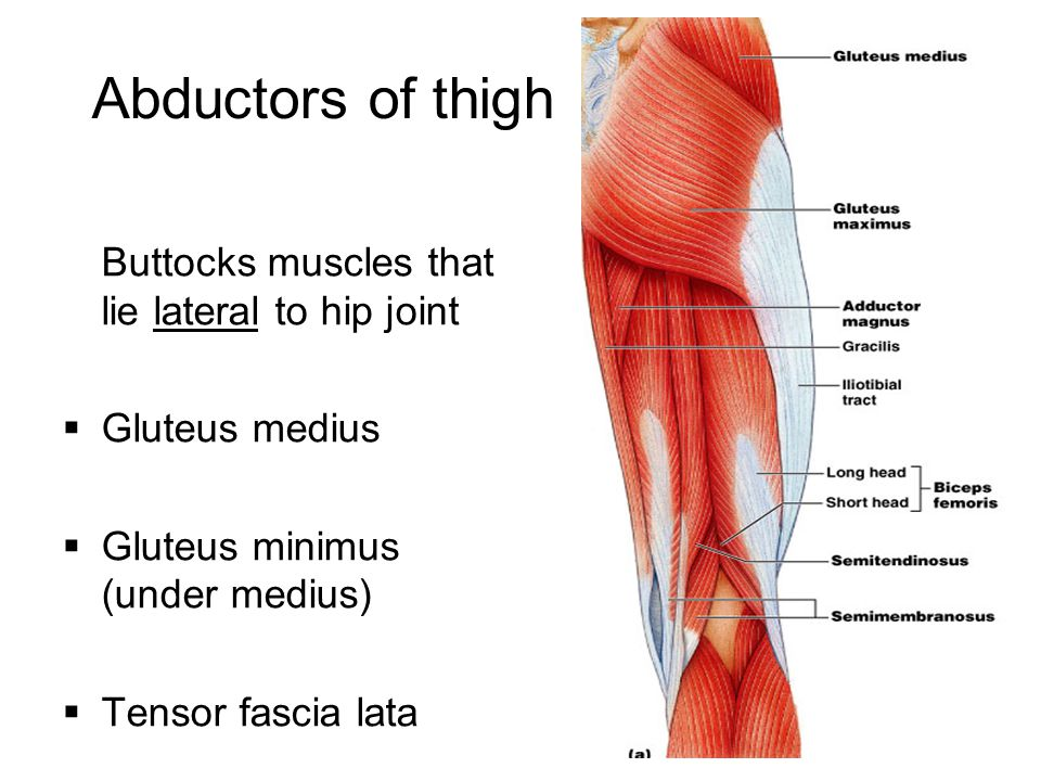 Abductors of thigh Buttocks muscles that lie lateral to hip joint