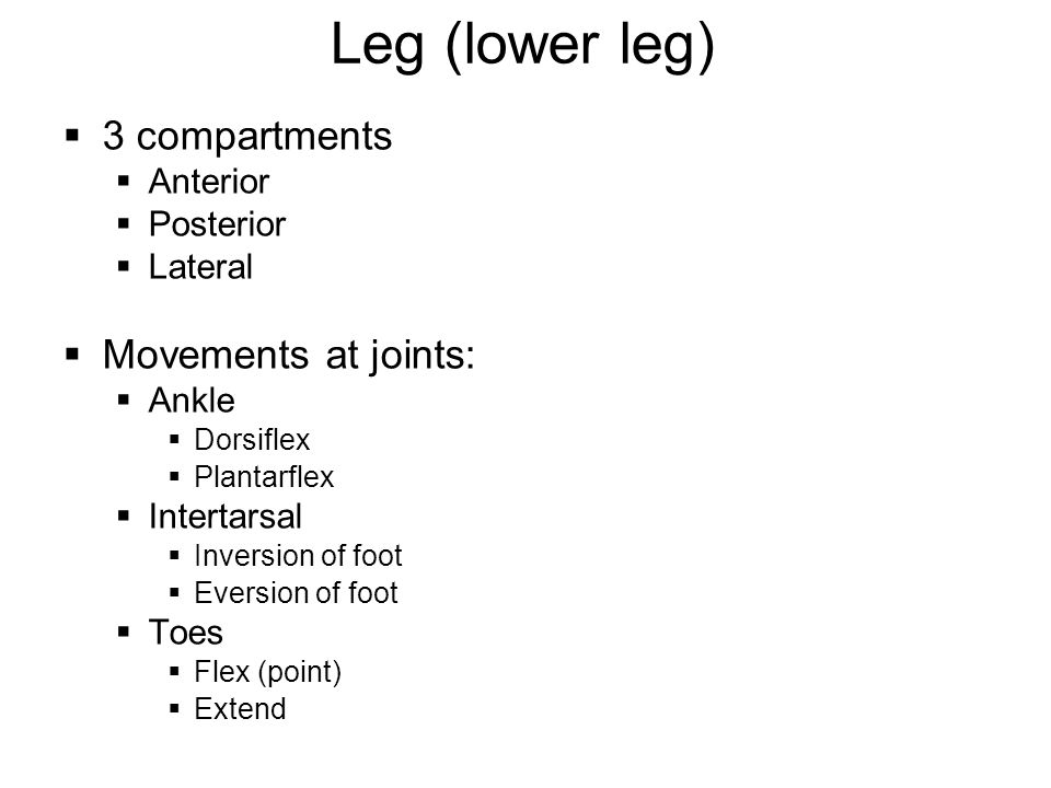 Leg (lower leg) 3 compartments Movements at joints: Anterior Posterior