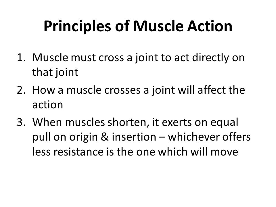 Principles of Muscle Action