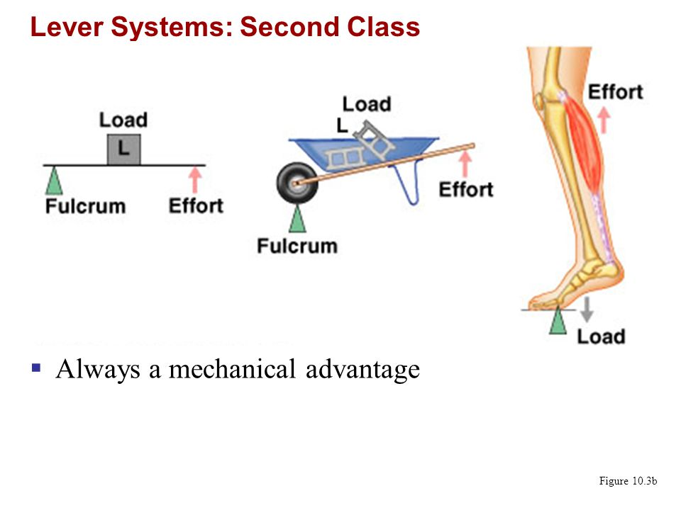 Lever Systems: Second Class
