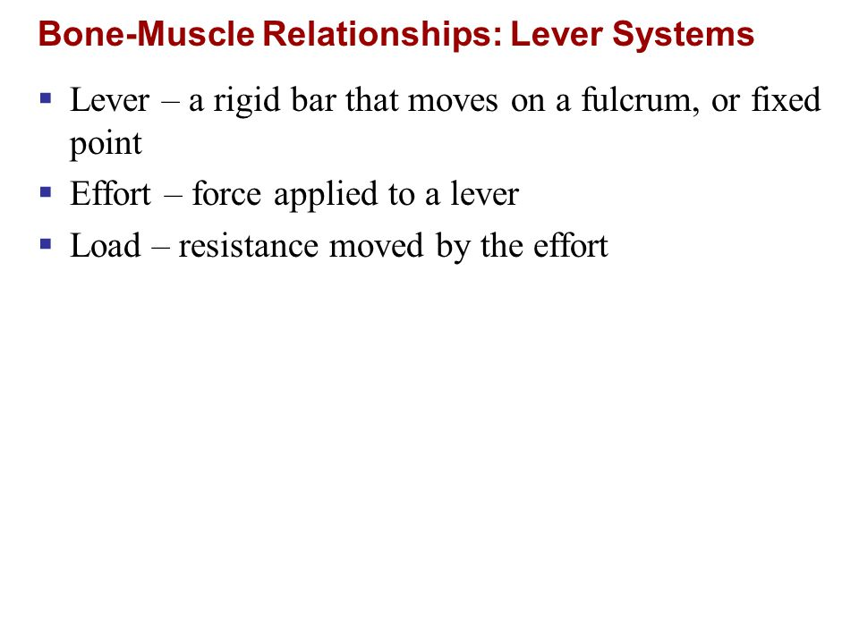Bone-Muscle Relationships: Lever Systems