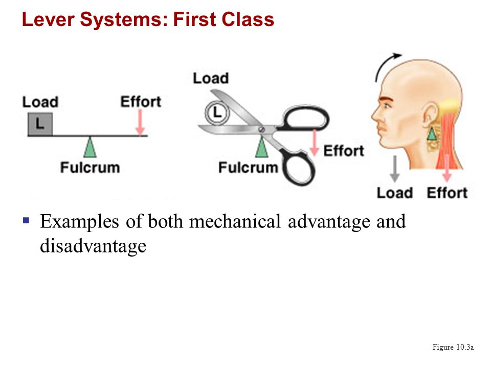 Lever Systems: First Class