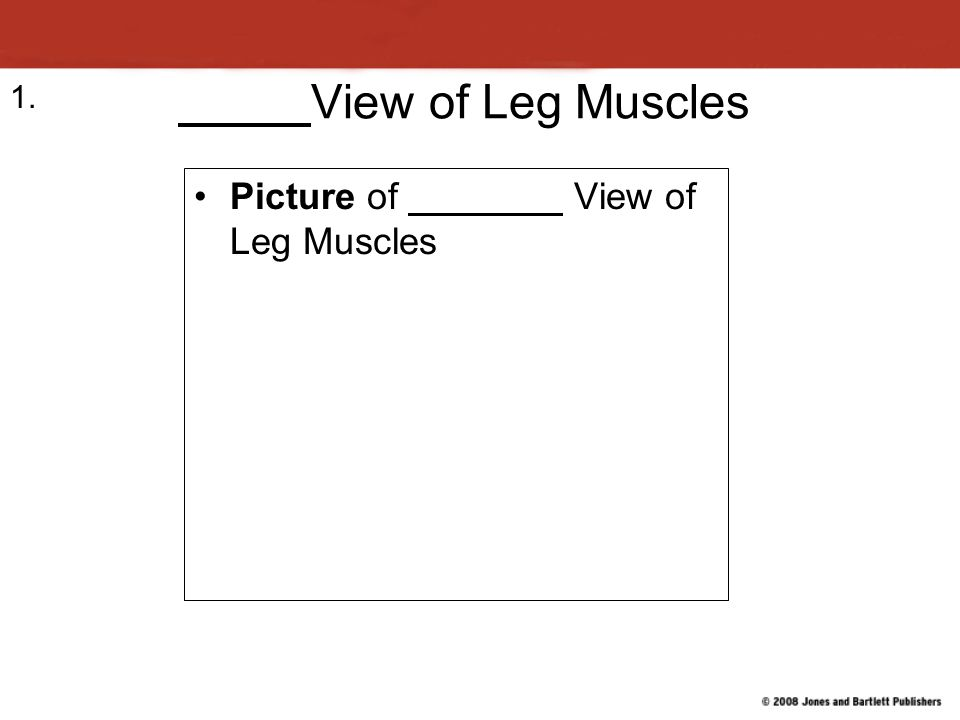 View of Leg Muscles 1. Picture of View of Leg Muscles