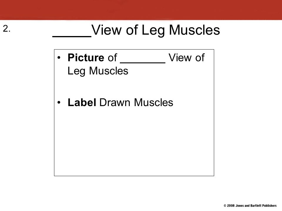 View of Leg Muscles Picture of View of Leg Muscles Label Drawn Muscles