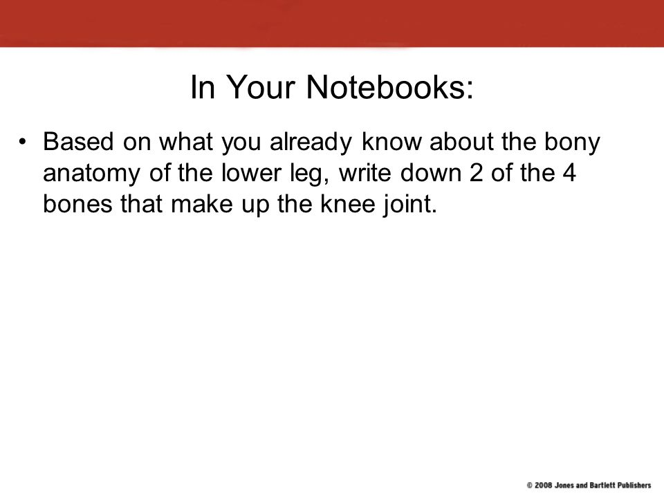 In Your Notebooks: Based on what you already know about the bony anatomy of the lower leg, write down 2 of the 4 bones that make up the knee joint.