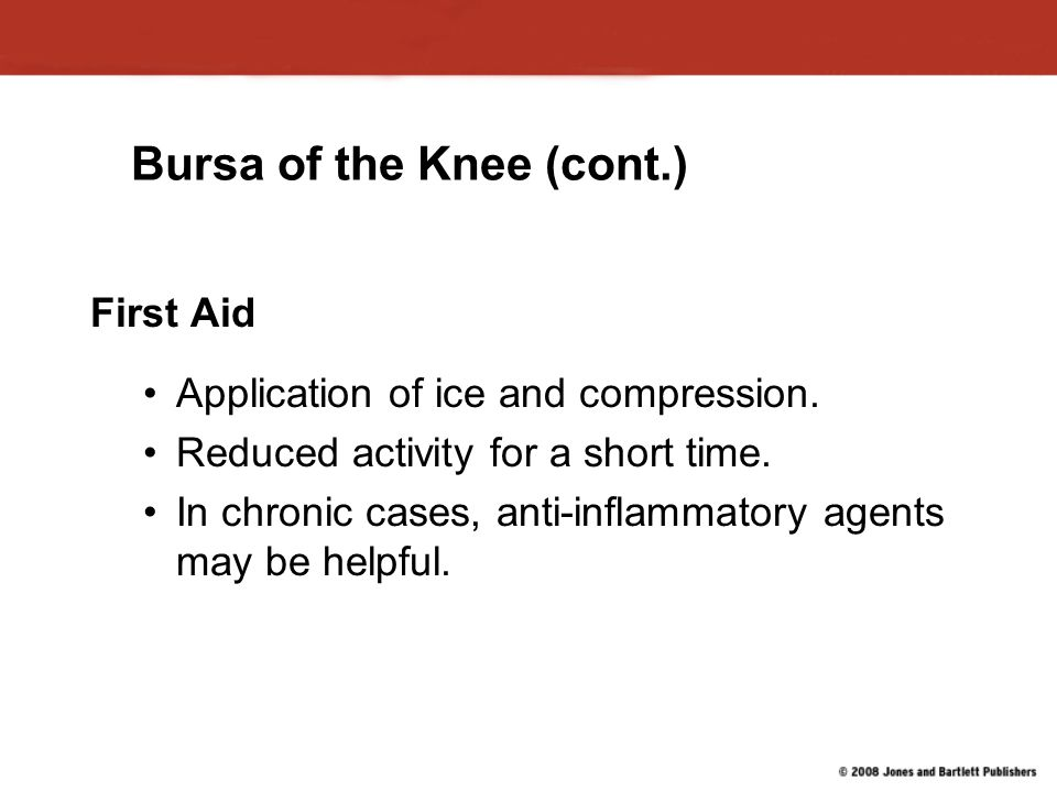 Bursa of the Knee (cont.)