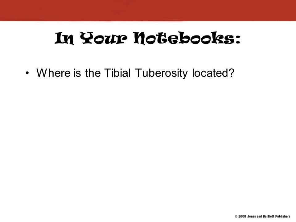 In Your Notebooks: Where is the Tibial Tuberosity located