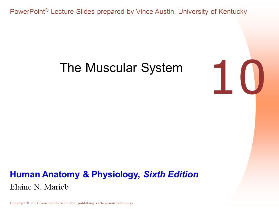 The Muscular System 10