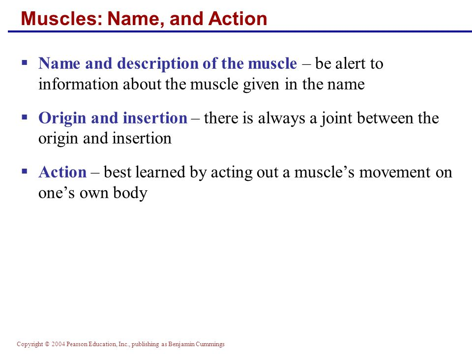 Muscles: Name, and Action