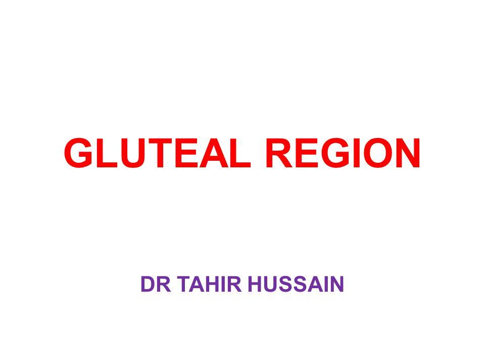 GLUTEAL REGION DR TAHIR HUSSAIN