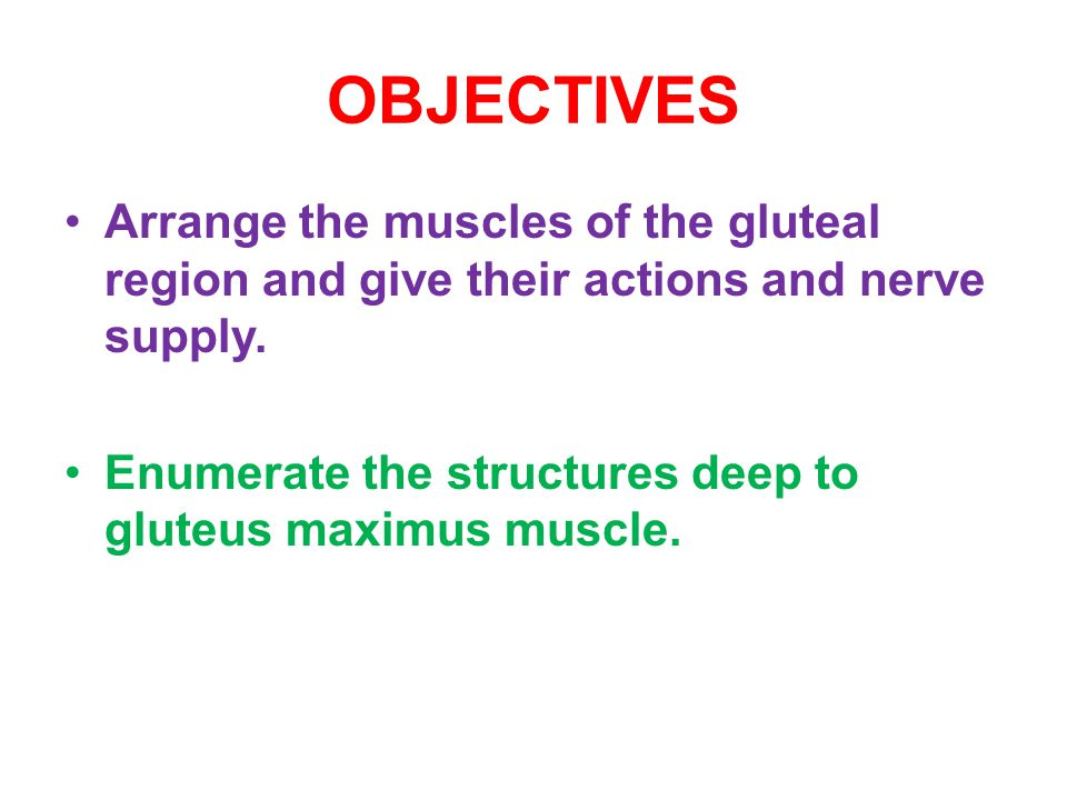 OBJECTIVES Arrange the muscles of the gluteal region and give their actions and nerve supply.