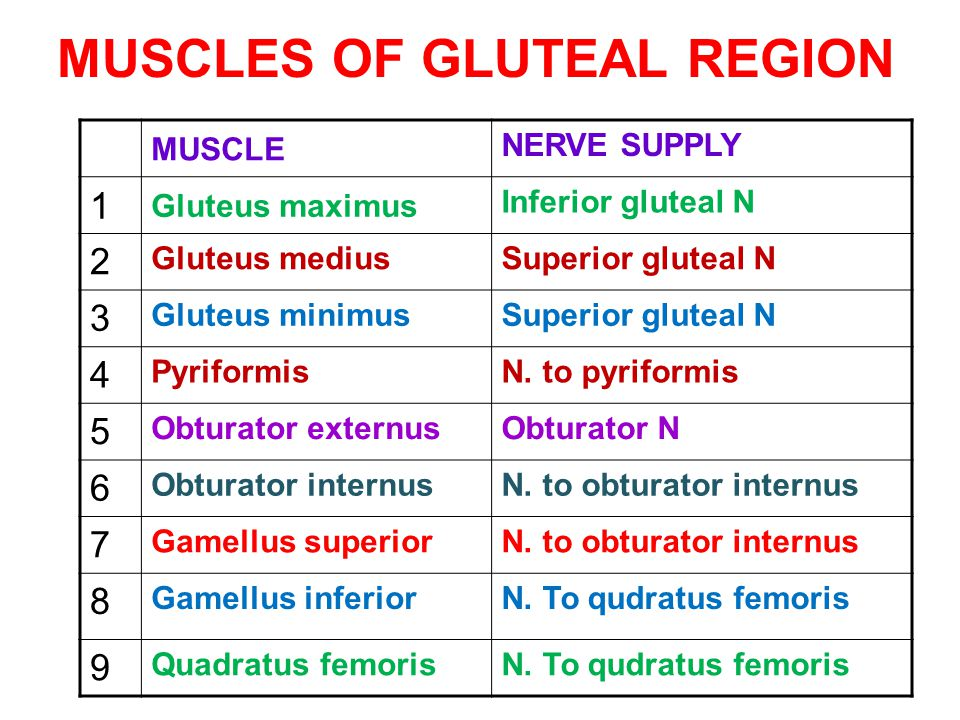MUSCLES OF GLUTEAL REGION