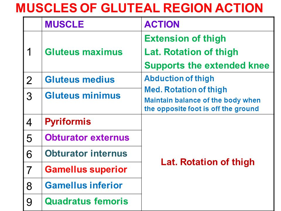 MUSCLES OF GLUTEAL REGION ACTION