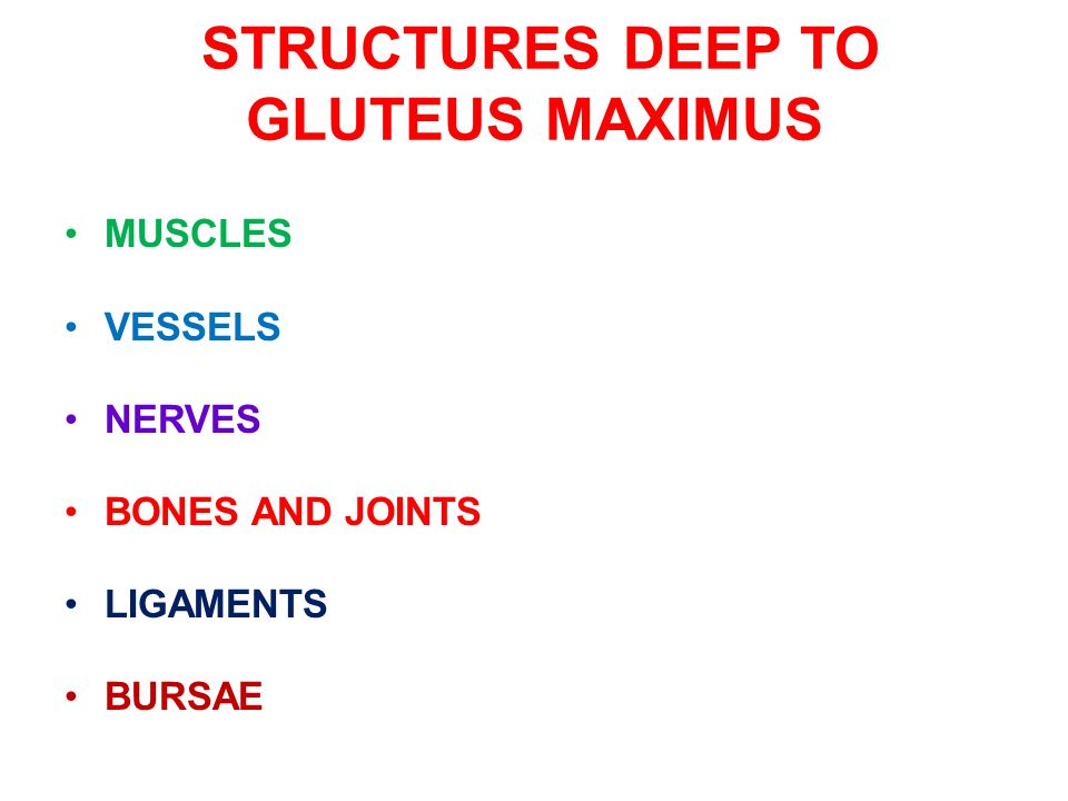 STRUCTURES DEEP TO GLUTEUS MAXIMUS